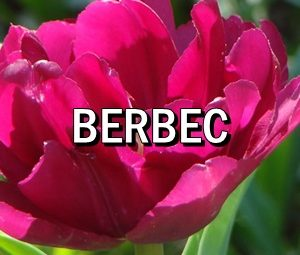 Horoscop zilnic Berbec in Acvaria.com Horoscopul de ieri, de azi si de maine pentru zodia Racului