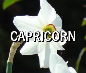 Horoscop zilnic Capricorn in Acvaria.com