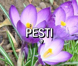 Horoscop zilnic Pesti in Acvaria.com