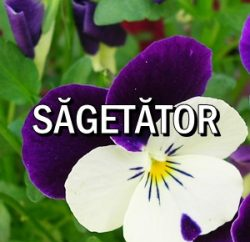 Horoscop zilnic Sagetator in Acvaria.com