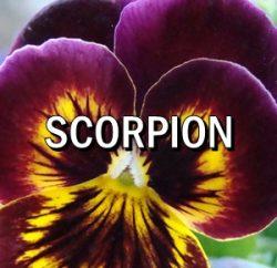 Horoscop zilnic Scorpion in Acvaria.com