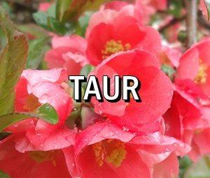 Horoscop zilnic Taur in Acvaria.com