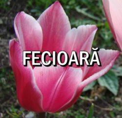 Horoscop zilnic Rac in Acvaria.com