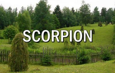 Horoscopul lunii AUGUST SCORPION