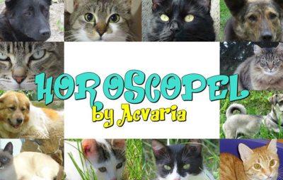 Horoscopel pentru catei si pisici